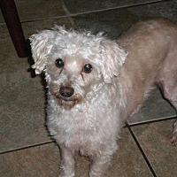 Adopt A Pet :: Benji - Brunswick, ME