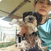 Adopt A Pet :: Young - Oakton, VA