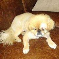 Adopt A Pet :: Snickers - Boonville, MO