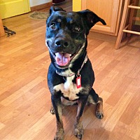 Adopt A Pet :: Zoey - Schaumburg, IL