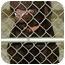 Photo 4 - Labrador Retriever Mix Dog for adoption in Fulton, Missouri - Wild Boy