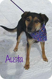 Shepherd (Unknown Type) Mix Dog for adoption in Menomonie, Wisconsin - Austa