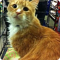Adopt A Pet :: Fonzie - Pittstown, NJ