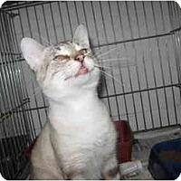 Adopt A Pet :: Eddie - Chesapeake, VA