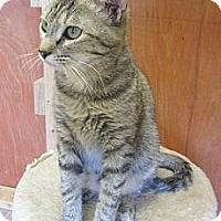 Adopt A Pet :: Bethany - Mobile, AL