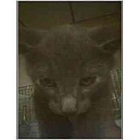 Adopt A Pet :: Oliver - Owasso, OK