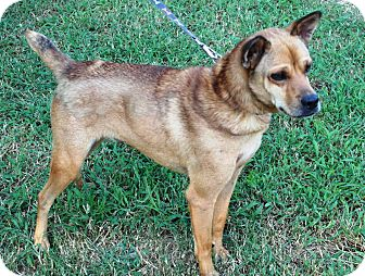 Terrier (Unknown Type, Small)/Brussels Griffon Mix Dog for adoption in Starkville, Mississippi - Mickey D