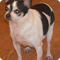 Adopt A Pet :: Trace - Prole, IA