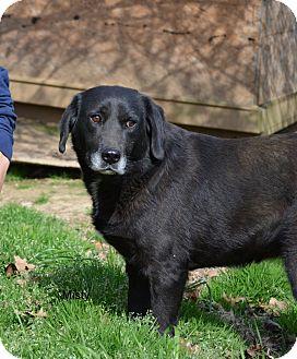 Labrador Retriever Mix Dog for adoption in Grenada, Mississippi - Misty
