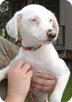 Australian Shepherd Mix Dog for adoption in Grand Saline, Texas - Troy