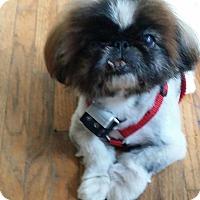 Adopt A Pet :: Sarge - SO CALIF, CA