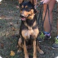 Adopt A Pet :: Mimi - South Dennis, MA