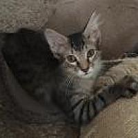 Adopt A Pet :: Emory - Sedalia, MO