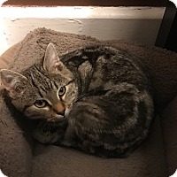 Adopt A Pet :: Bobcat & Leo - Horsham, PA