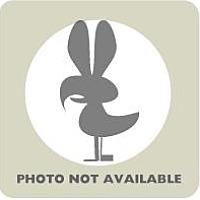 Adopt A Pet :: Pekin female - Fairport, NY