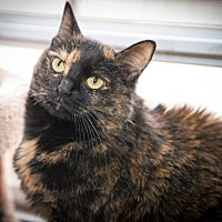 Adopt A Pet :: Thumbelina - New York, NY