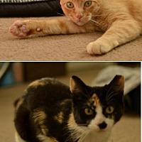 Adopt A Pet :: Precious and Oscar - Novato, CA
