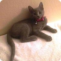 Adopt A Pet :: Brooke - Antioch, CA