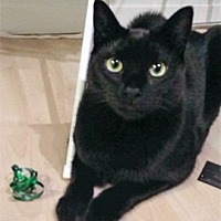 Adopt A Pet :: Bart - Vancouver, BC