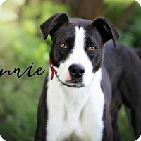 Adopt A Pet :: Minnie - Joliet, IL