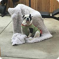 Adopt A Pet :: Xena - Van Nuys, CA