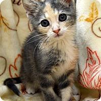 Adopt A Pet :: Kiyah - Richmond, VA