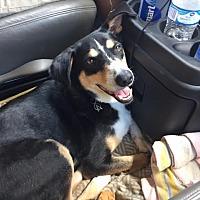 Adopt A Pet :: Grover (ETAA) - Foster, RI