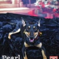 Adopt A Pet :: Pearl - Gulfport, MS