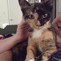 Adopt A Pet :: Teri - Maryville, TN