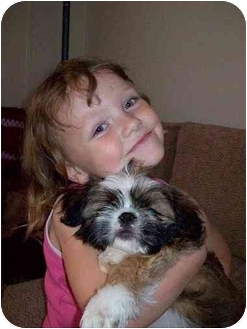 Shih Tzu/Pekingese Mix Puppy for adoption in Lancaster, South Carolina - Maggie