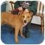 "Photo 1 - Australian Shepherd/Australian Cattle Dog Mix Dog for adoption in MARION, Virginia - ""Riley"""