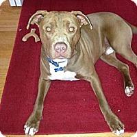 Adopt A Pet :: Rusty - Milford, MI