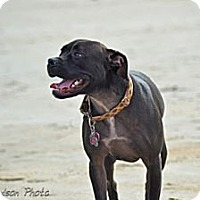 Adopt A Pet :: Chelsey Lynn-PENDING-in Maine! - kennebunkport, ME