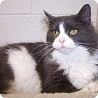 Adopt A Pet :: Burgess - Colorado Springs, CO