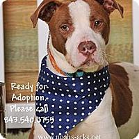 Adopt A Pet :: WAGNER - Okatie, SC