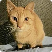 Adopt A Pet :: Drake - Colmar, PA
