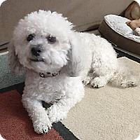 Adopt A Pet :: Milo - East Hanover, NJ