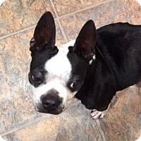 Adopt A Pet :: Ivy - Jackson, TN