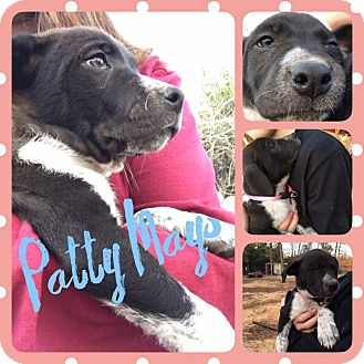 Labrador Retriever Mix Puppy for adoption in Hearne, Texas - Patty Mays