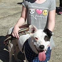 Adopt A Pet :: Peaches - Toms River, NJ