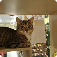 Adopt A Pet :: Romeo - Winchester, CA