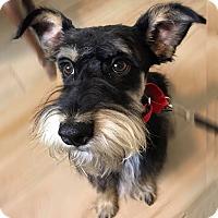 Adopt A Pet :: Carter - Redondo Beach, CA