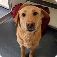 Adopt A Pet :: McGregor - Midlothian, VA