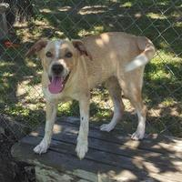 Adopt A Pet :: Nikki - Bartlesville, OK