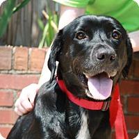 Adopt A Pet :: Maisie - Richmond, VA
