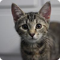 Adopt A Pet :: Yoyo - Richmond, VA