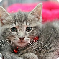 Adopt A Pet :: Nora the Nimble - Fairfax Station, VA
