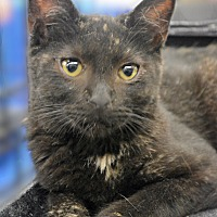 Adopt A Pet :: Dandelion - Eureka, CA