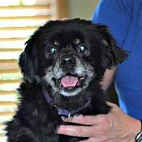 Adopt A Pet :: Leo - Durham, NC