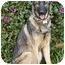 Photo 3 - German Shepherd Dog Dog for adoption in Los Angeles, California - Stella von Skye